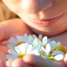 ambientadores-flores